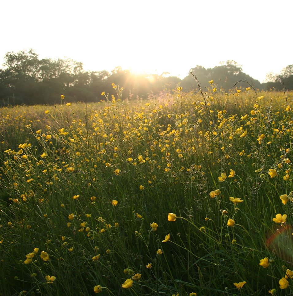 One of the lovely secret meadows